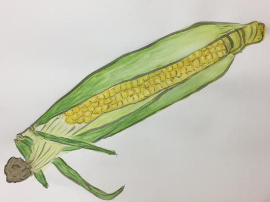 おとな 水彩/夏野菜を描く