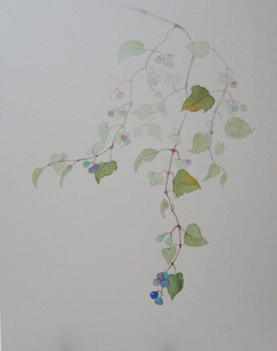 おとな・植物写生/青い真珠